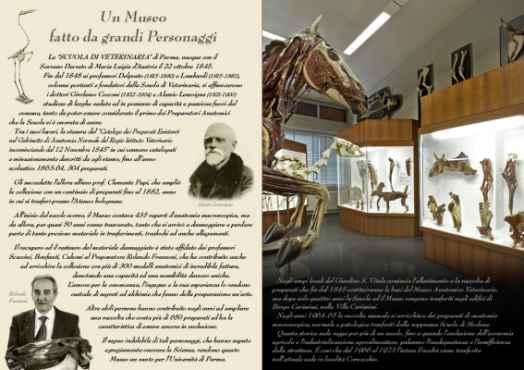 Parma - Museo Anatomico Veterinario - Musei universitari