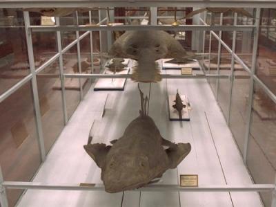 Parma - Museo di Storia Naturale - Musei universitari