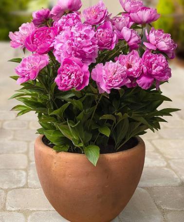Ghiaia in fiore, mercato floreale e di piante ornamentali