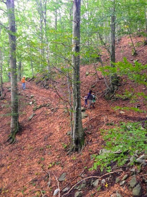"""""""Camminaparchi"""":  90 escursioni a piedi, in bicicletta e a cavallo"""