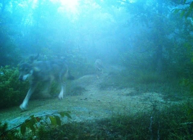 Sulla via del lupo: escursione al Parco Cento Laghi