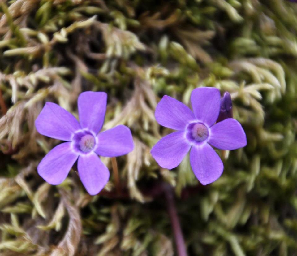I colori della primavera: dipingiamo fiori e piante del Parco del Taro,- Evento per bambini dai 7 anni in su