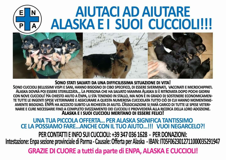 Aiuta Alaska e i suoi cuccioli