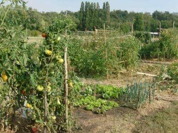 L'ORTO DEL CUORE, impariamo le basi per realizzare un orto produttivo e in sintonia con la natura.