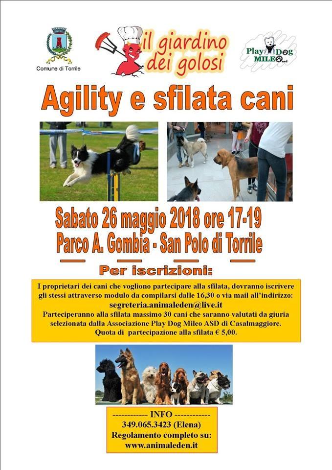 Agility e sfilata di cani a Torrile