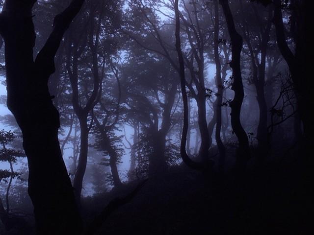 Bosco, savana e greto: l'ambiente selvaggio del fiume I mercoledì sera di Terre Emerse