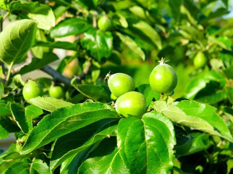 Passeggiata botanica con degustazione di frutti di bosco