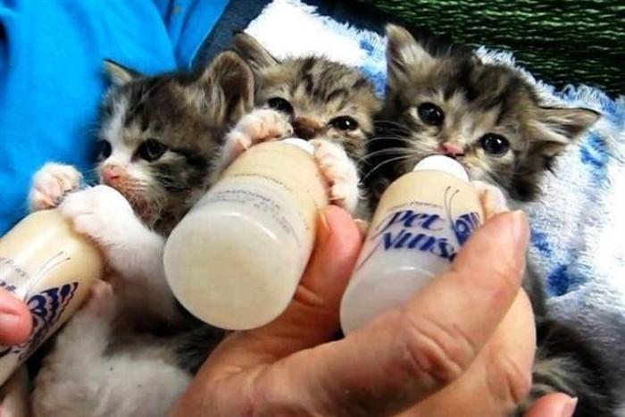 Corso di allattamento per gatti agli Aristogatti