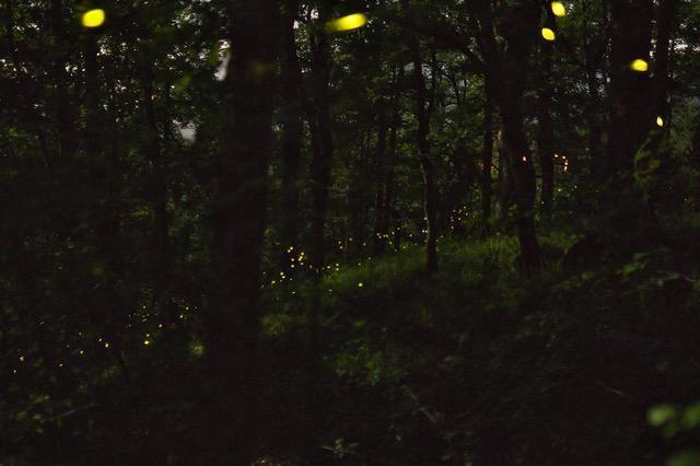 SCIE NELLA NOTTE   Impariamo a fotografare le scie di lucciole tra boschi e prati
