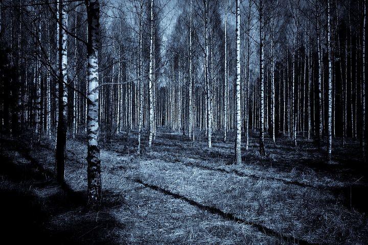 """""""Notti di luna piena: Escursione guidata ed emozionanti scoperte nel bosco di notte"""""""