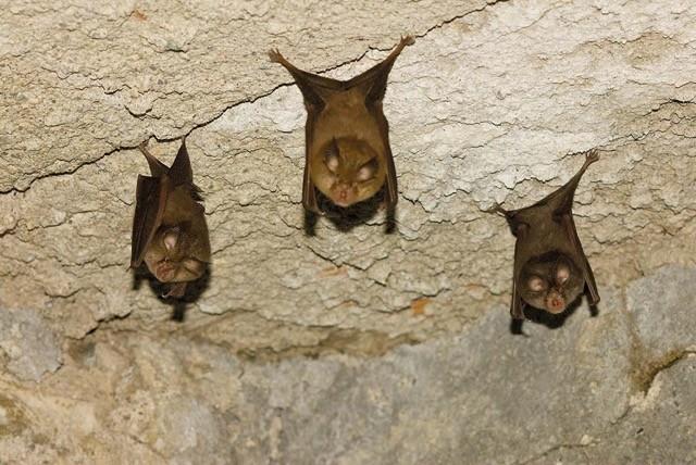 La notte del pipistrello Antonio Ruggieri, esperto del settore, ci spiega il mondo dei pipistrelli-