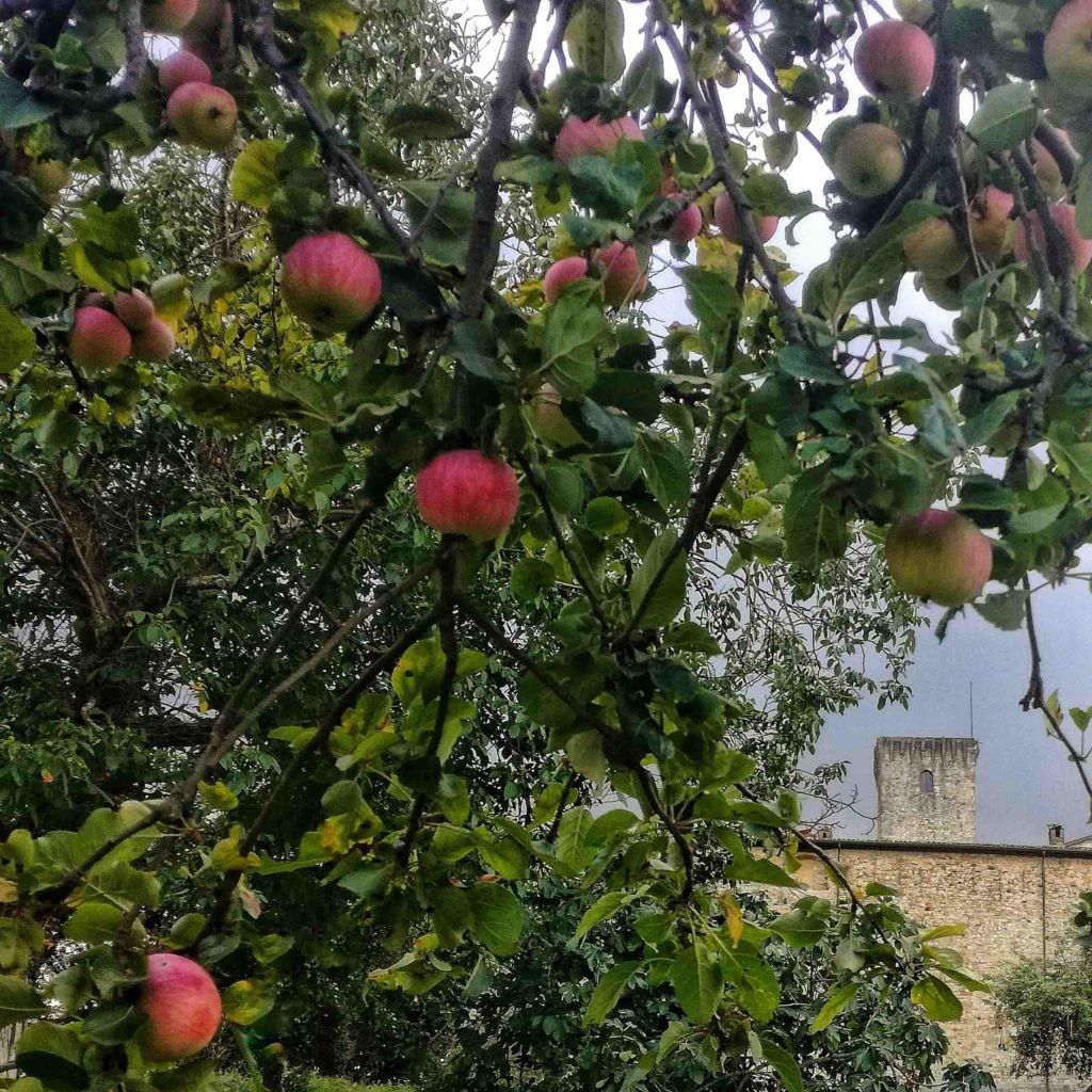 IN FRUCTIBUS  Raccolta di mele e pere nell'antico frutteto del Castello