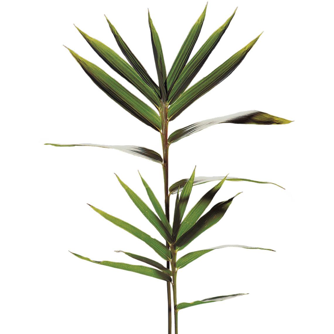 app di incontri di bambù