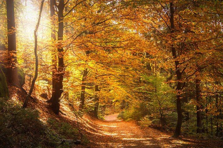 Foliage e castagne nell'Alta Val Parma