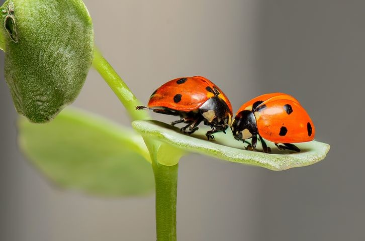 Un hotel per gli insetti