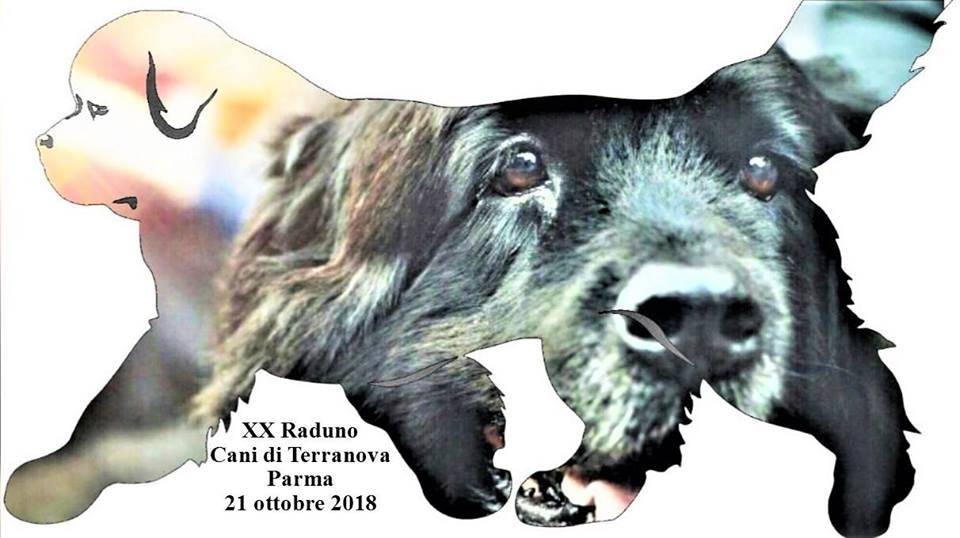 XX Raduno Cani di Terranova - Parma 2018