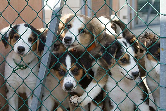 """Benedizione degli animali  alla casa degli animali del Comune di Parma """"Lilli e il Vagabondo"""""""