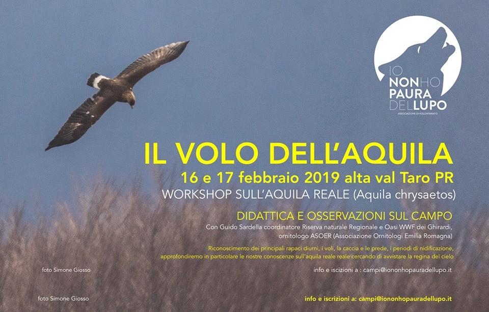 Workshop Il volo dell'aquila