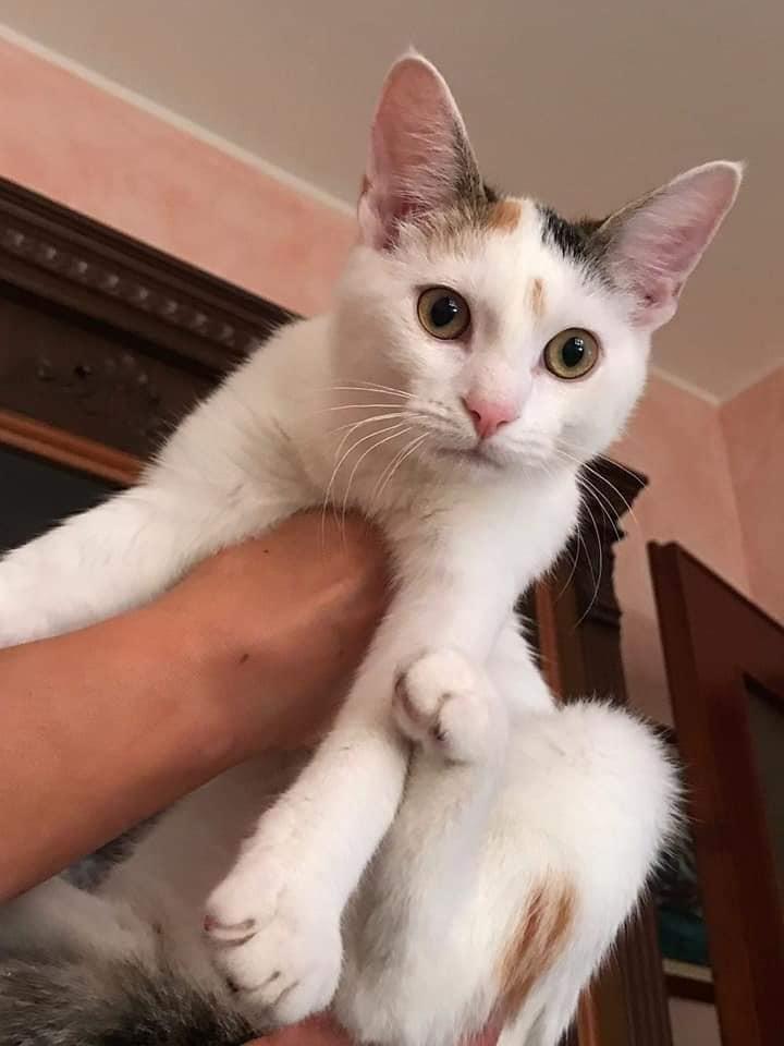 Scomparsa gattina a Noceto, chi l'ha vista?