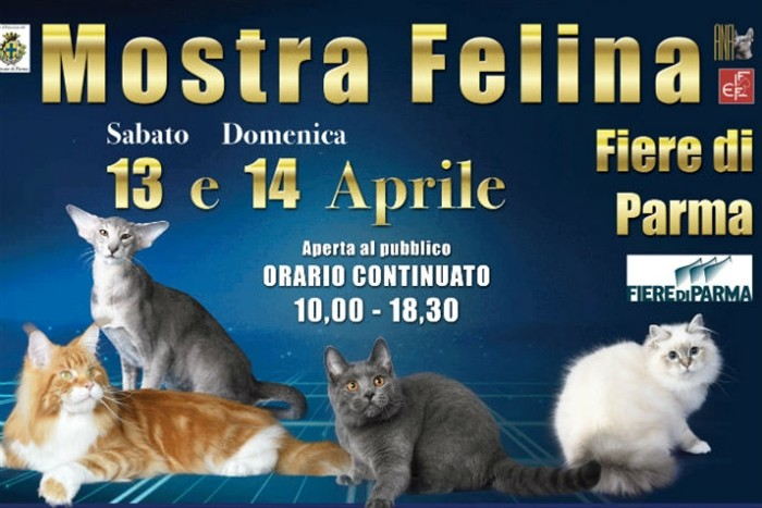 """Star Cats Show"" Mostra felina – campionati europei di bellezza"