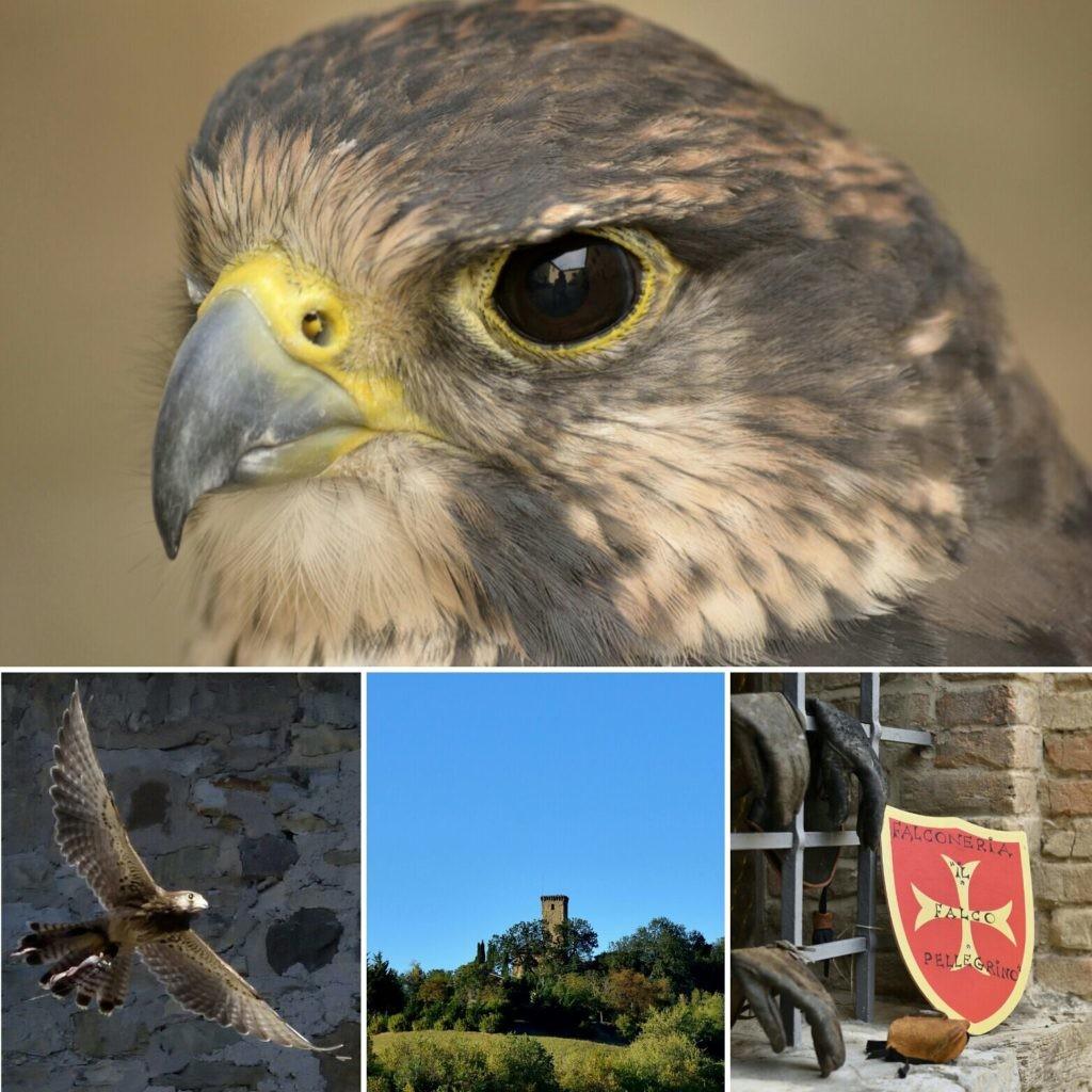 """""""VOLA IL MEDIOEVO.   Dimostrazioni di volo libero di falconeria al castello di Contignaco"""