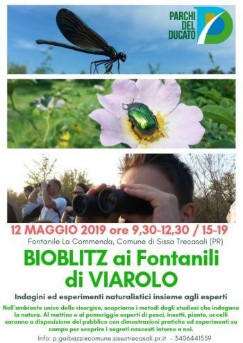 BIOBLITZ ai Fontanili di Viarolo: Domenica 12 Maggio