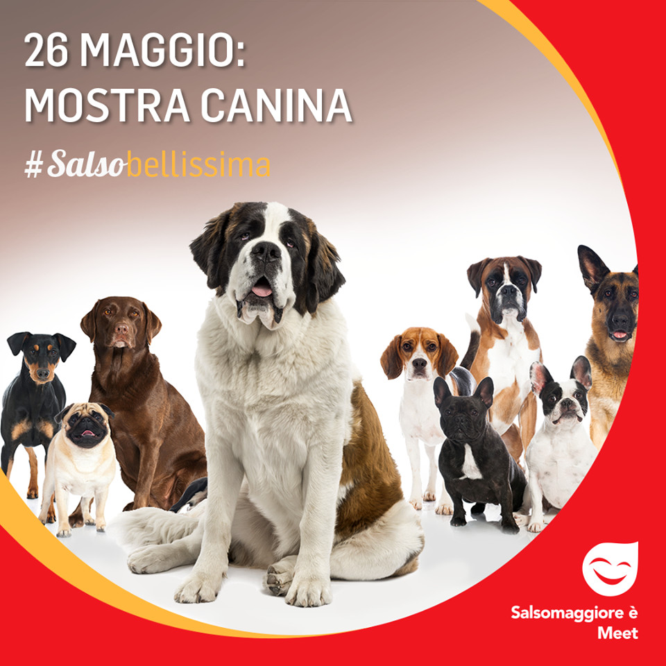Raduno amatoriale di cani San Bernardo