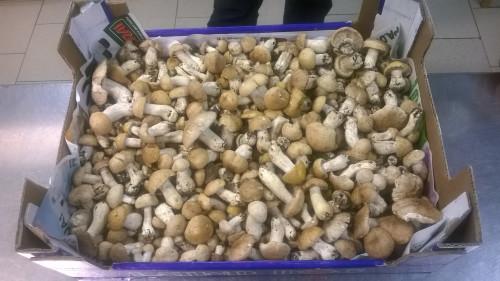 """Prugnoli al ristorante """"da Rino"""", specialità funghi"""