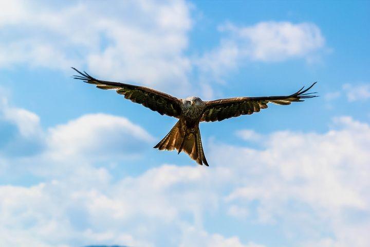 L'Aquila di Riana: tra i suoi prati e sotto le sue pareti