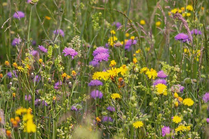 Il giardino delle buone erbe nella Riserva Parma Morta