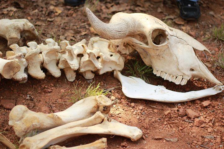 Scopriamo le ossa dei nostri amici animali: attività gratuita per bambini nel Parco dello Stirone Piacenziano