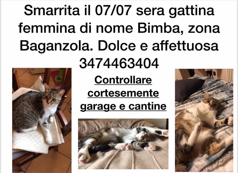 Smarrita a Baganzola gattina di nome bimba - Ha un orecchio tagliato