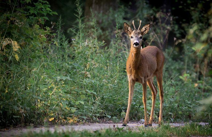 Una serata tra gli animali del Parco del Monte FusoI recinti del Parco questa sera si apriranno per noi