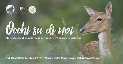 """Mostra """"Occhi su di Noi, Il ritorno della fauna selvatica nell'Appennino Valtarese"""""""