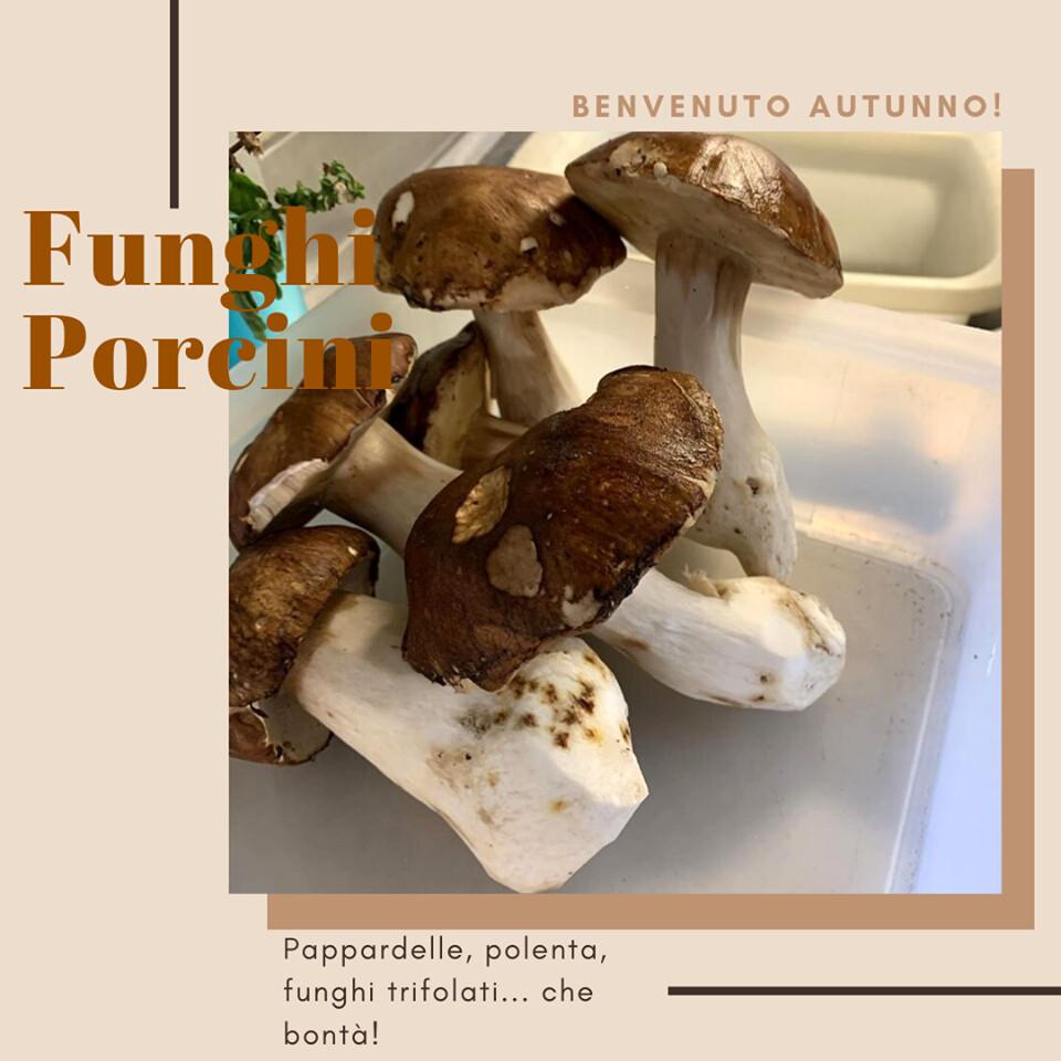 I primi sapori dell'autunno... i FUNGHI PORCINI vi aspettano al ristorante VECCHIA FUCINA