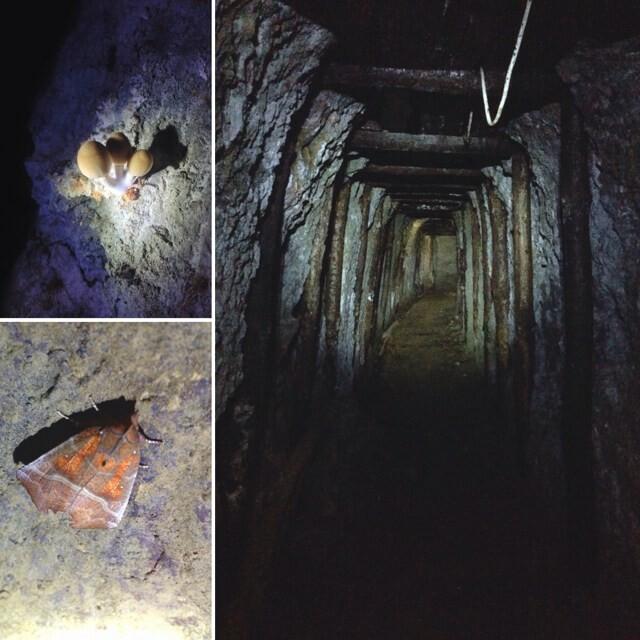 Viaggio alle Miniere di Corchia  domenica 6 ottobre