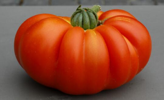 Presentazione del volume  ORO ROSSO  Fragole, pomodori, molestie e sfruttamento nel Mediterraneo  di Stefania Prandi