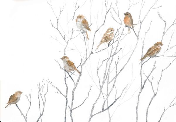 Come nutrire i piccoli uccelli del giardino e del davanzale