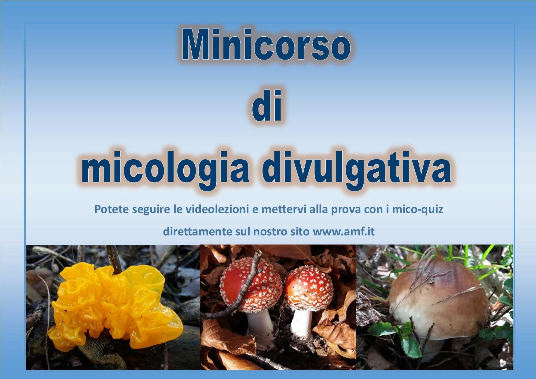 """Sul sito WWW.AMF.IT un minicorso di """"micologia divulgativa"""""""