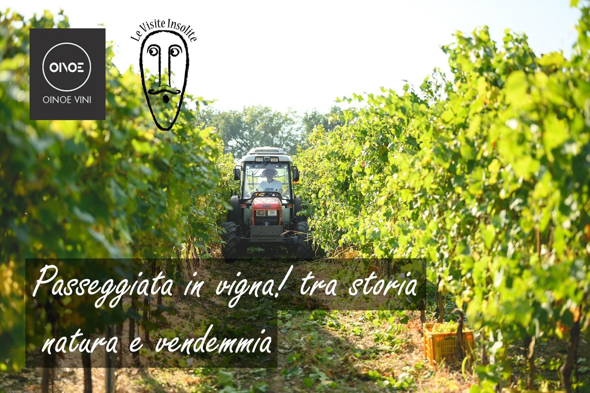 Speciale passeggiata in vigna con degustazione da Oinoe Vini
