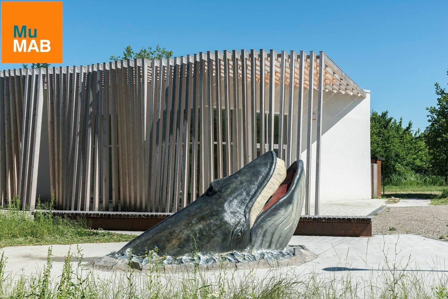 Aperture del weekend del  MUMAB - Museo Mare Antico e Biodiversità nel Parco dello Stirone-Piacenziano: