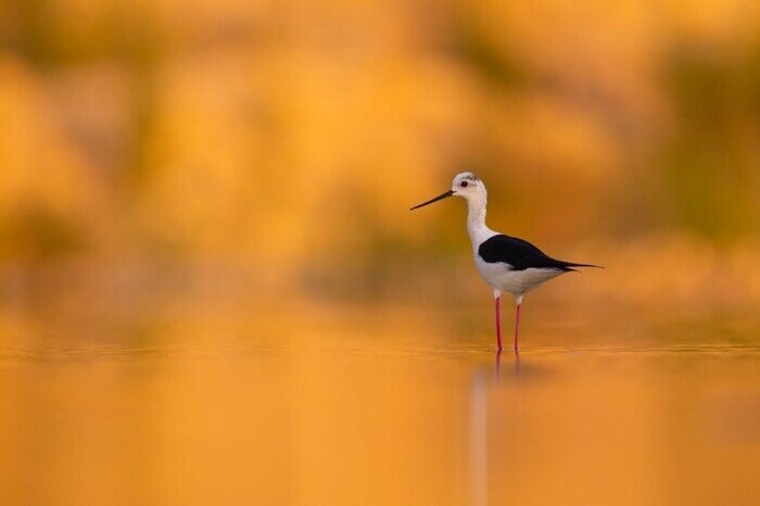 Il Cambiamento. Un viaggio nella natura per immagini, mostra fotografica di Michele Mendi sotto i Portici del Grano