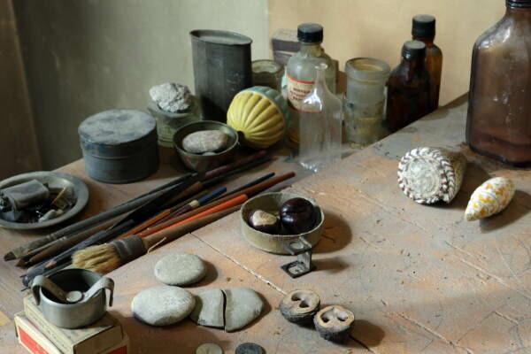 MAMbo - Museo d'Arte Moderna di Bologna RE-COLLECTING Castagne matte