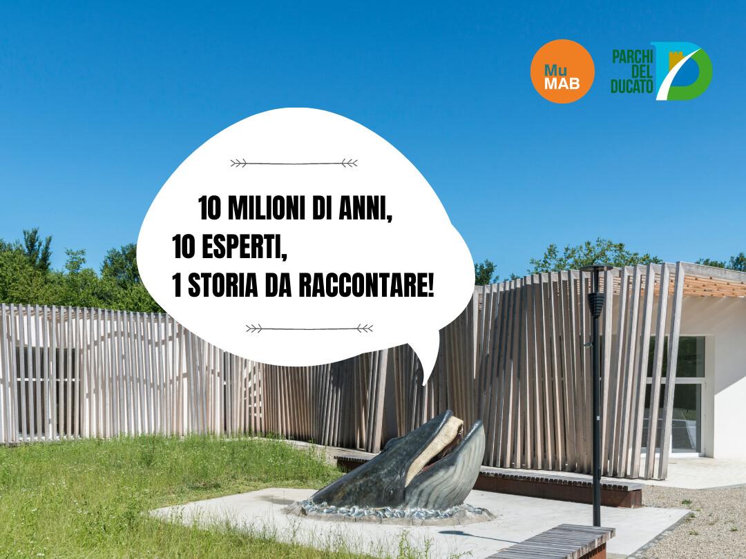 5 webinar dedicati al MuMAB :   Musei come istituzioni.