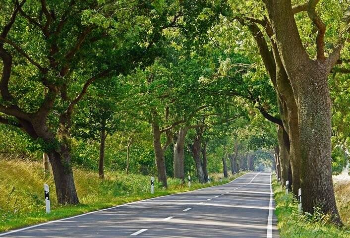 Comune di Traversetolo: Al via a breve un censimento del patrimonio arboreo pubblico