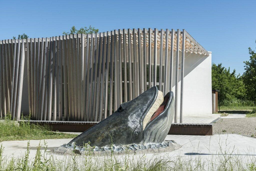 Il MuMAB è aperto! Quando le balene avevano le zampe.  Un pomeriggio con Charles Darwin