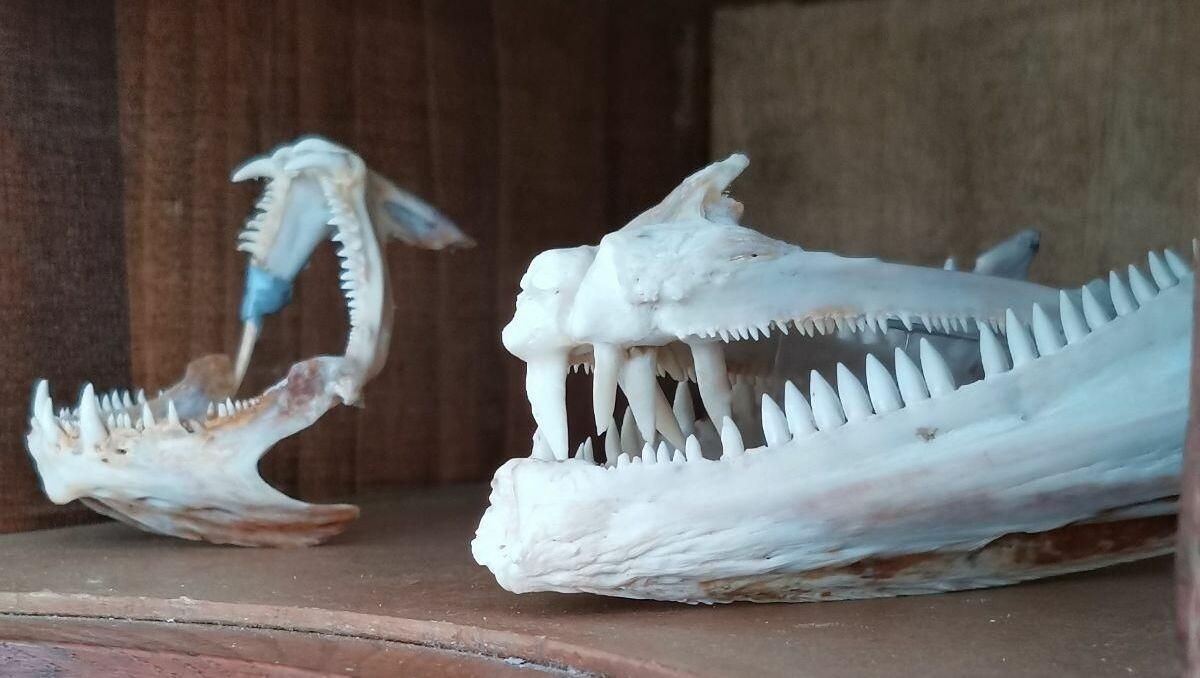 es-SERE al MuMAB ogni mercoledì accendiamo le torce per esplorare il Museo e il Parco